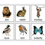 15 Animal Flash Cards   Kittybabylove   Free Printable Farm Animal Flash Cards