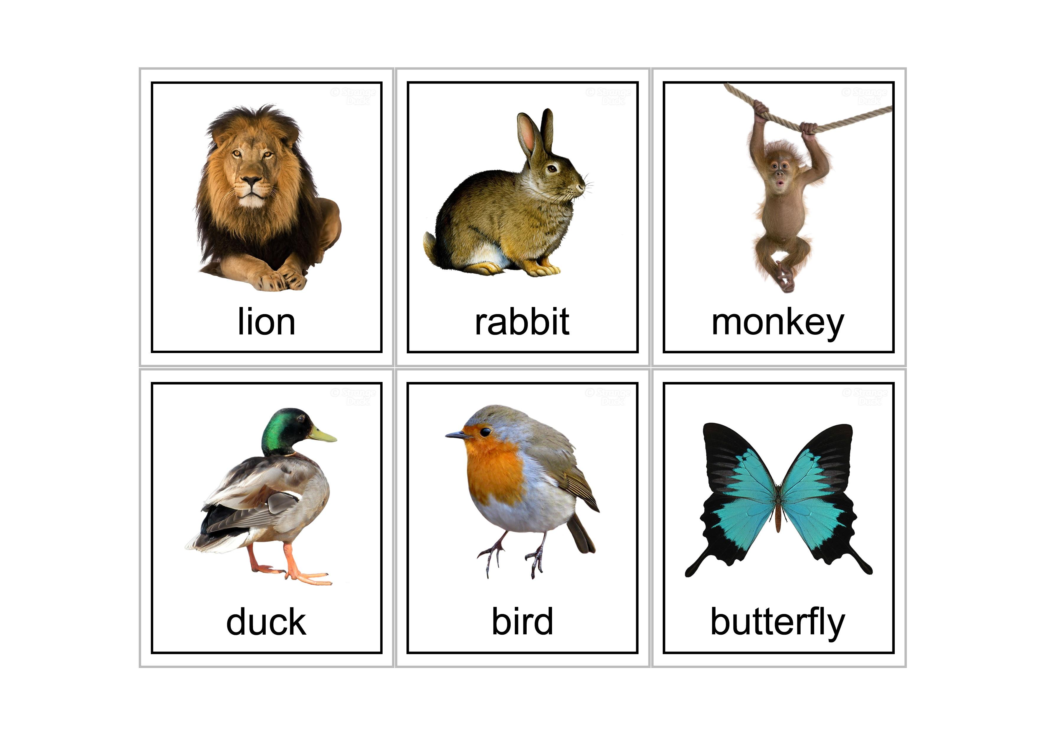 15 Animal Flash Cards | Kittybabylove - Free Printable Farm Animal Flash Cards