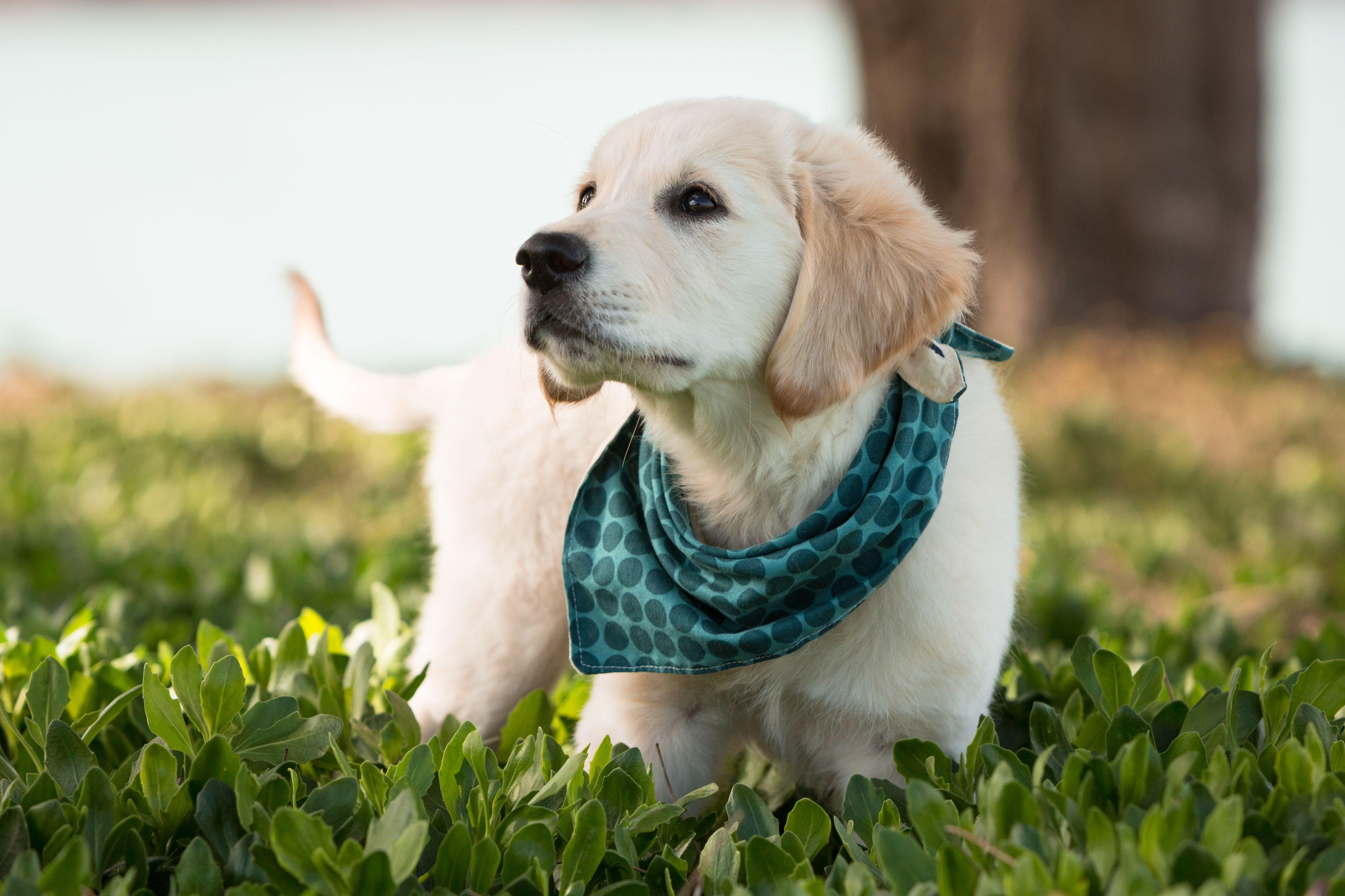 23 Free Dog Clothes Patterns - Free Printable Dog Pajama Pattern