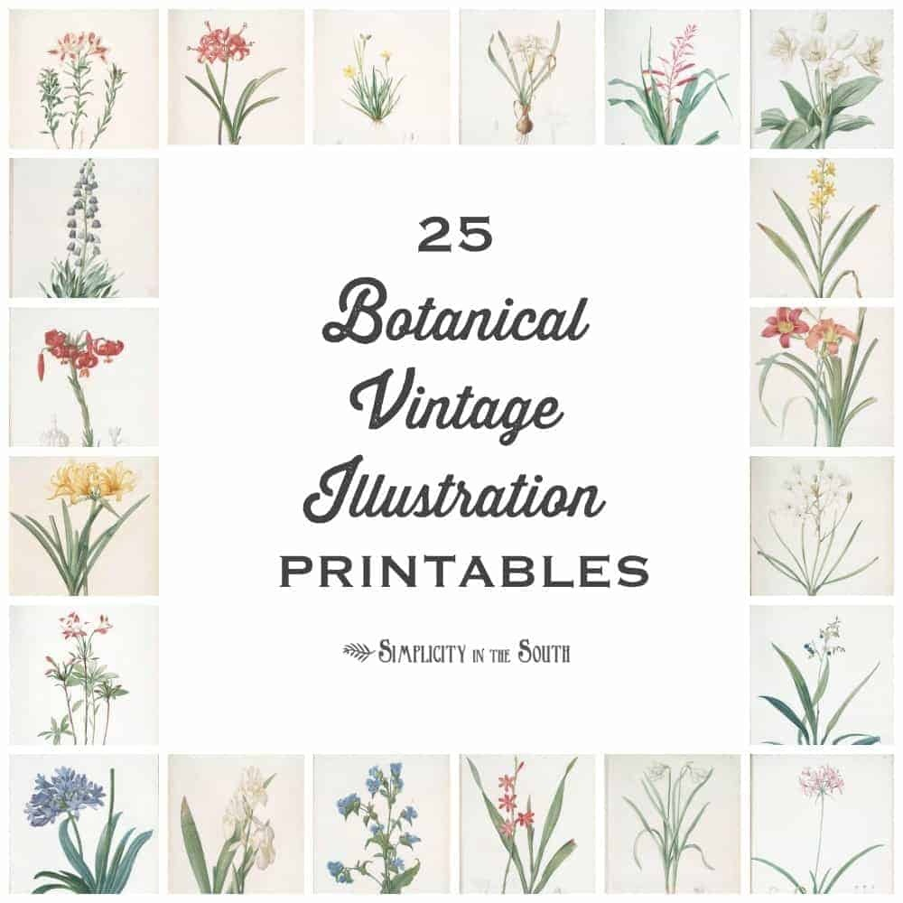 25 Vintage Botanical Illustrations: Free Printable Art - Free Printable Vintage Art