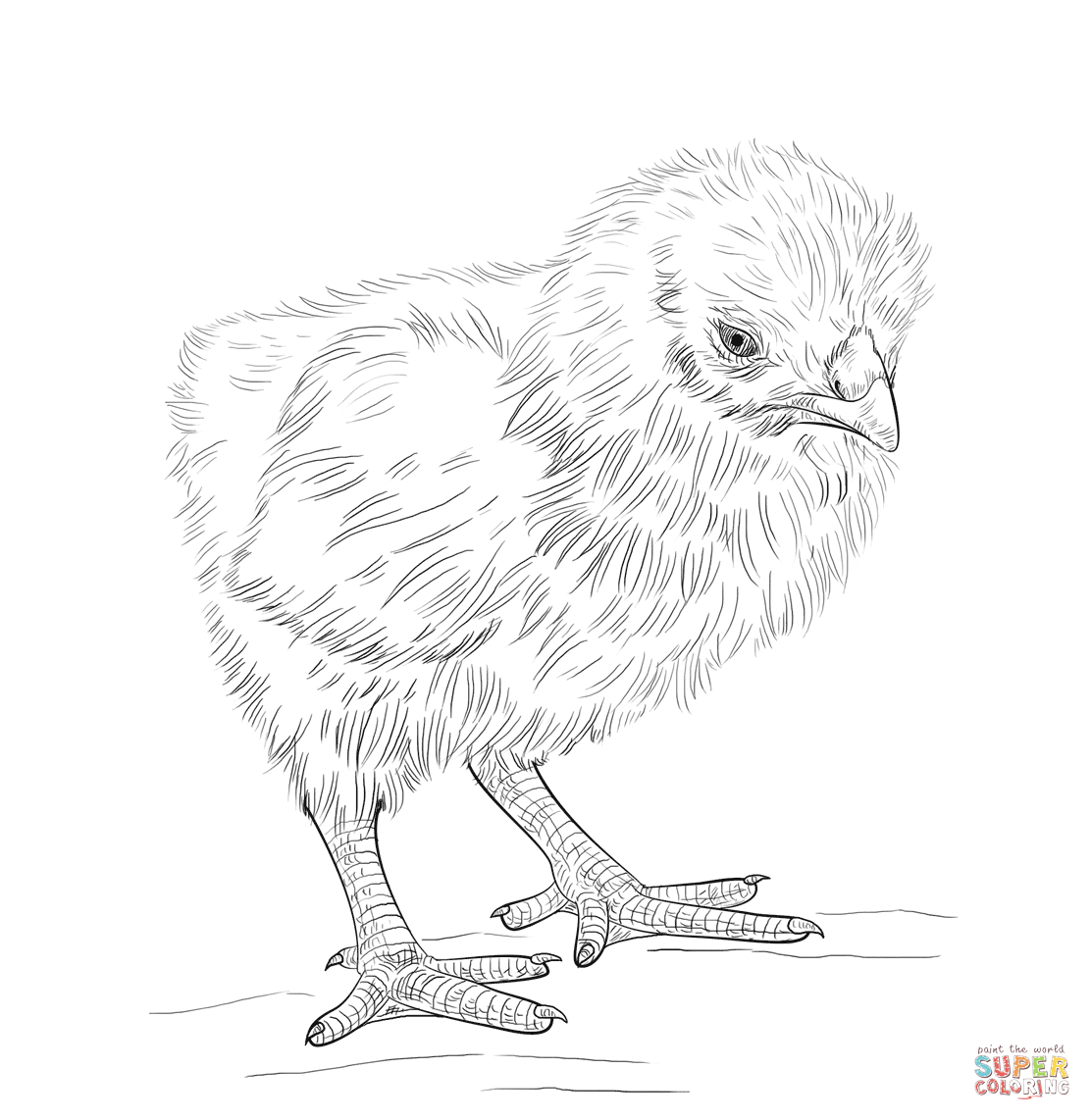 Baby Chick Coloring Page | Free Printable Coloring Pages - Free Printable Easter Baby Chick Coloring Pages