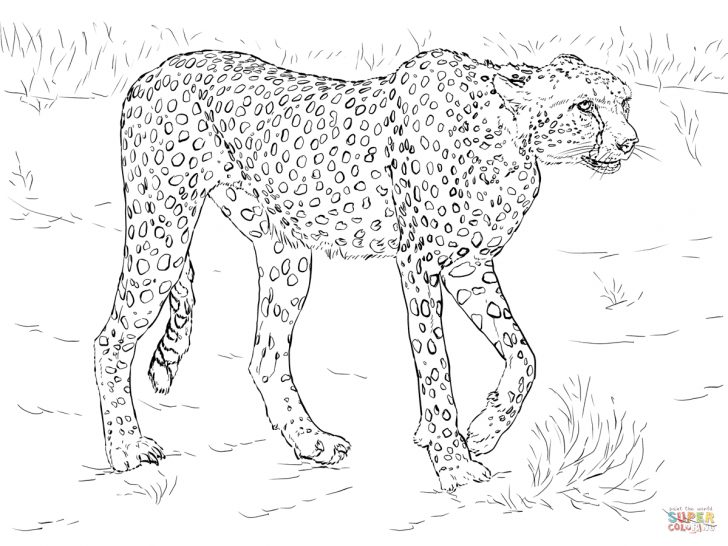 Free Printable Cheetah Pictures