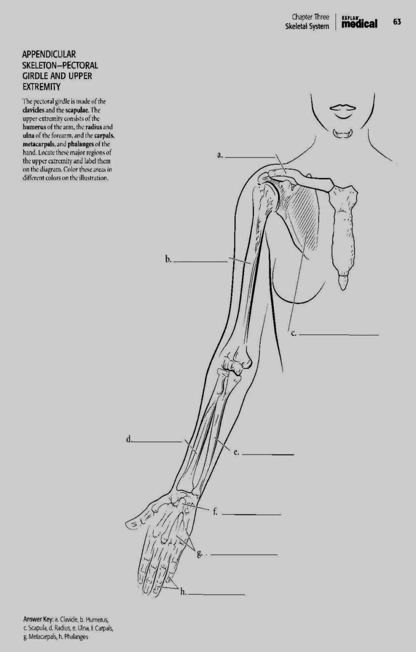 Coloring Pages Ideas: Saunders Veterinary Anatomy Coloringok Pdf - Free Printable Anatomy Pictures