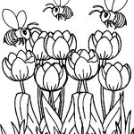Coloring+Pages+Tulips | Printable Tulip Coloring Pages | Kids   Free Printable Tulip Coloring Pages