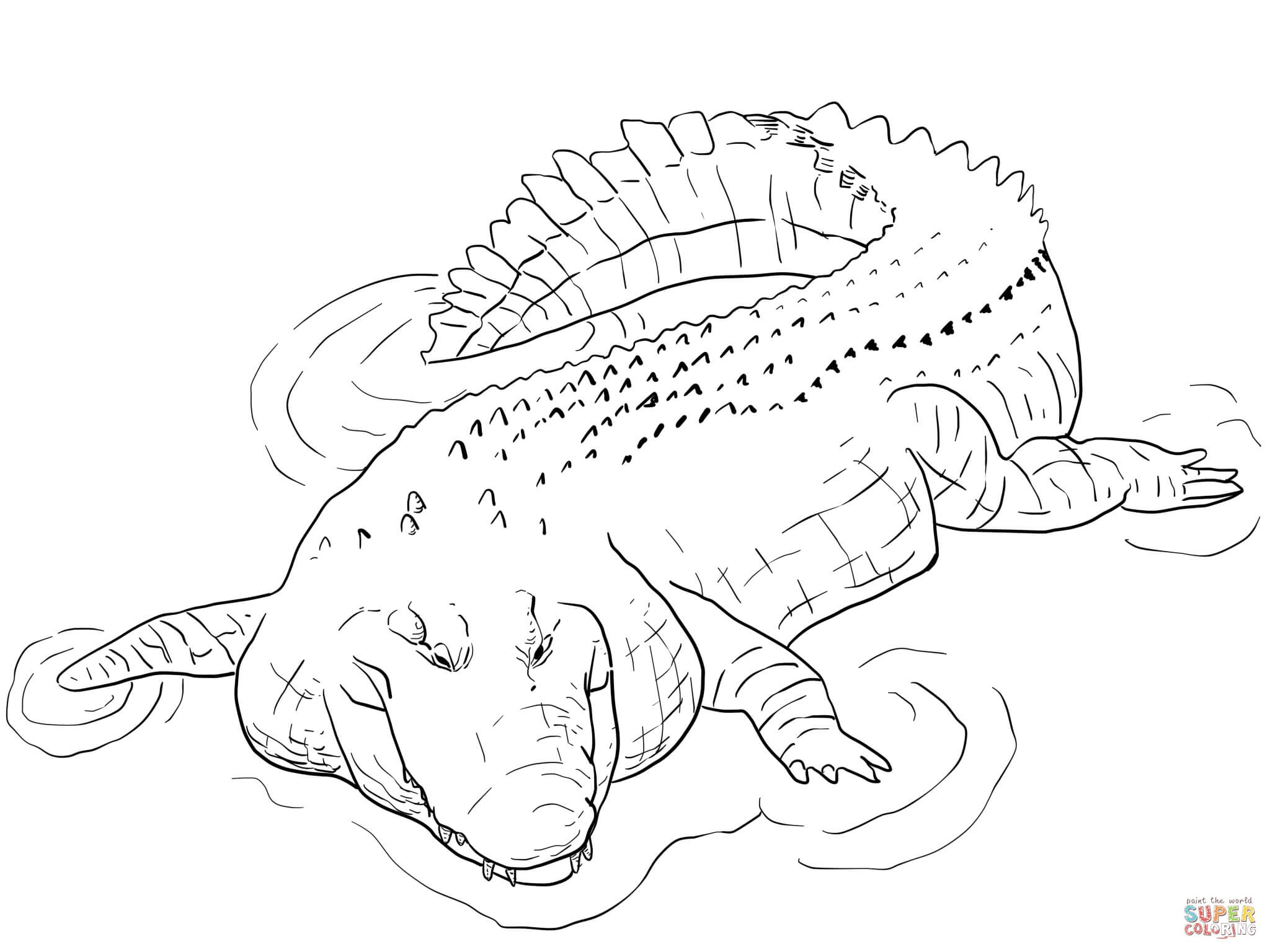Crocodile Coloring Pages | Free Coloring Pages - Free Printable Pictures Of Crocodiles