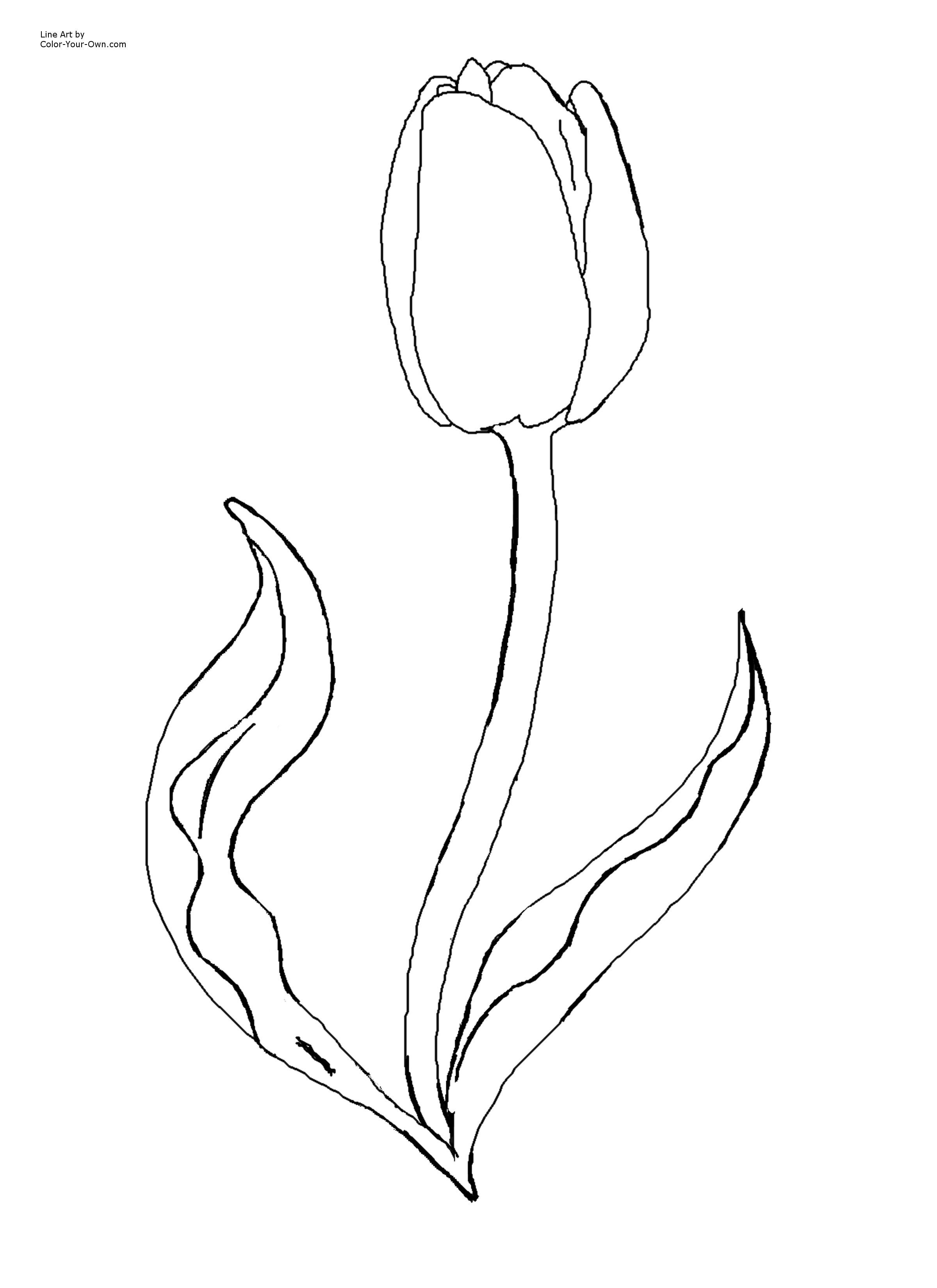 Flower Page Printable Coloring Sheets | Spring Flowers Coloring - Free Printable Tulip Coloring Pages