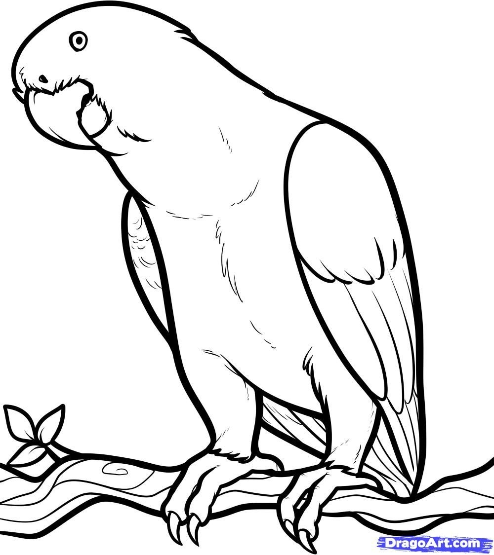 Free Coloring Page Of African Animals | African Grey, African Grey - Free Printable Parrot Coloring Pages