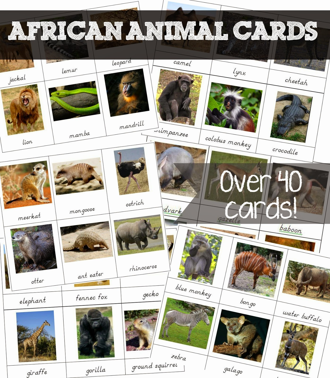 Free Printable African Animal Cards - Welcome To Mommyhood - Free Printable Welcome Cards
