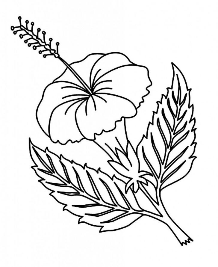 Free Printable Hibiscus Coloring Pages