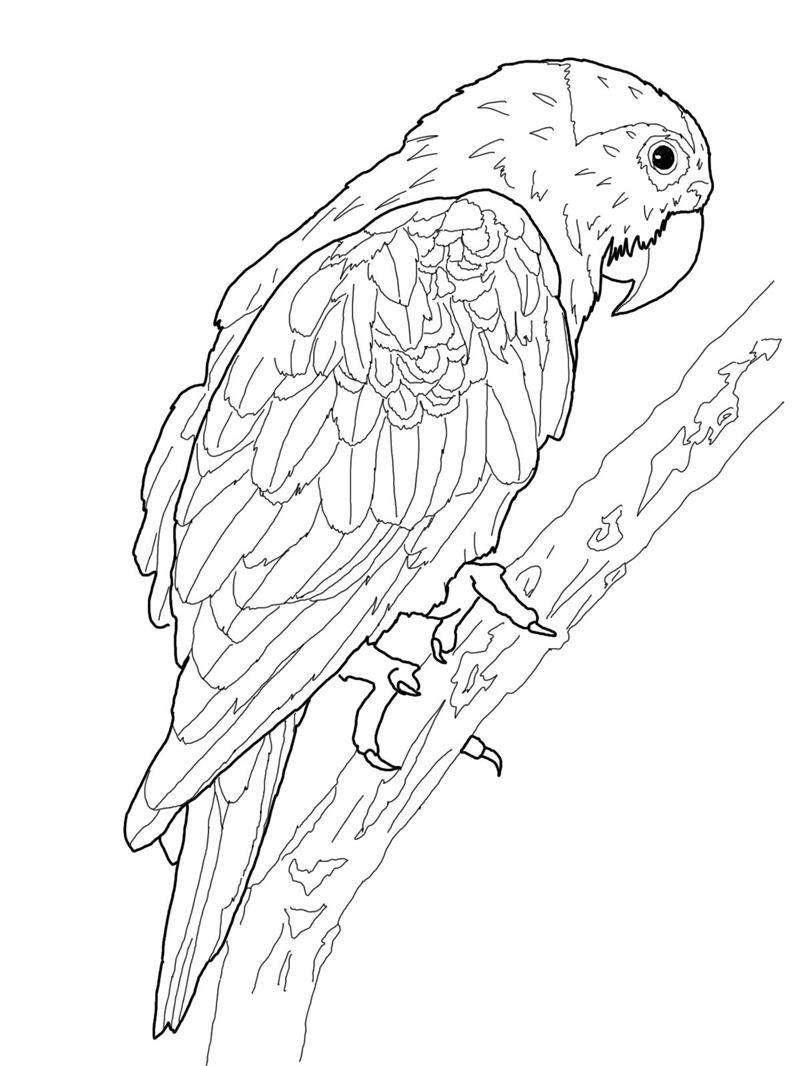 Free Printable Parrot Coloring Pages For Kids | Ahhhhh.. | Bird - Free Printable Parrot Coloring Pages