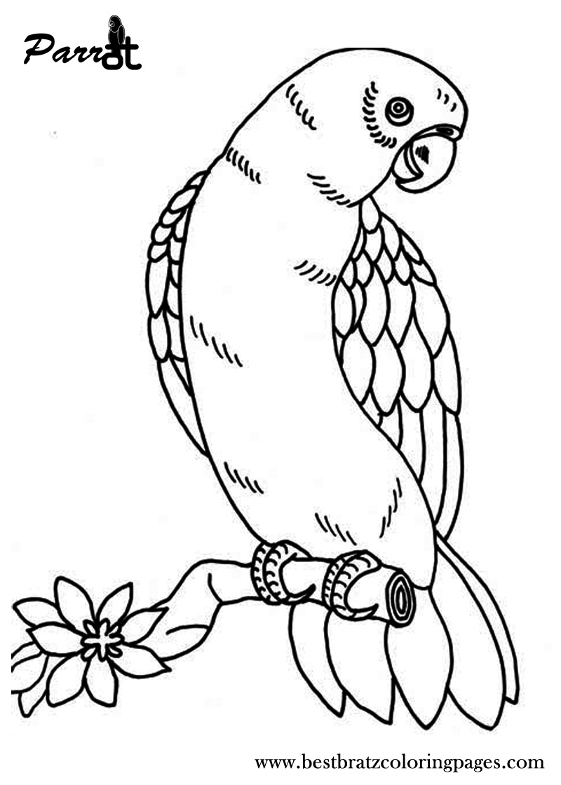 Free Printable Parrot Coloring Pages For Kids | Coloring Pages | Owl - Free Printable Parrot Coloring Pages