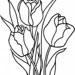 Free Printable Tulip Coloring Pages For Kids   Free Printable Tulip Coloring Pages