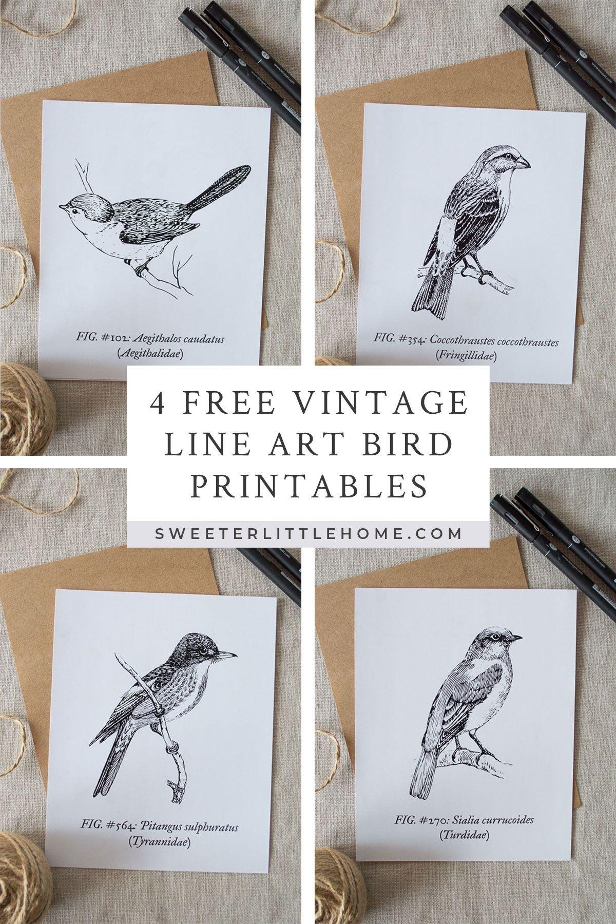 Free Printable Vintage Bird Line Art | For The Home | Vintage Birds - Free Printable Vintage Art