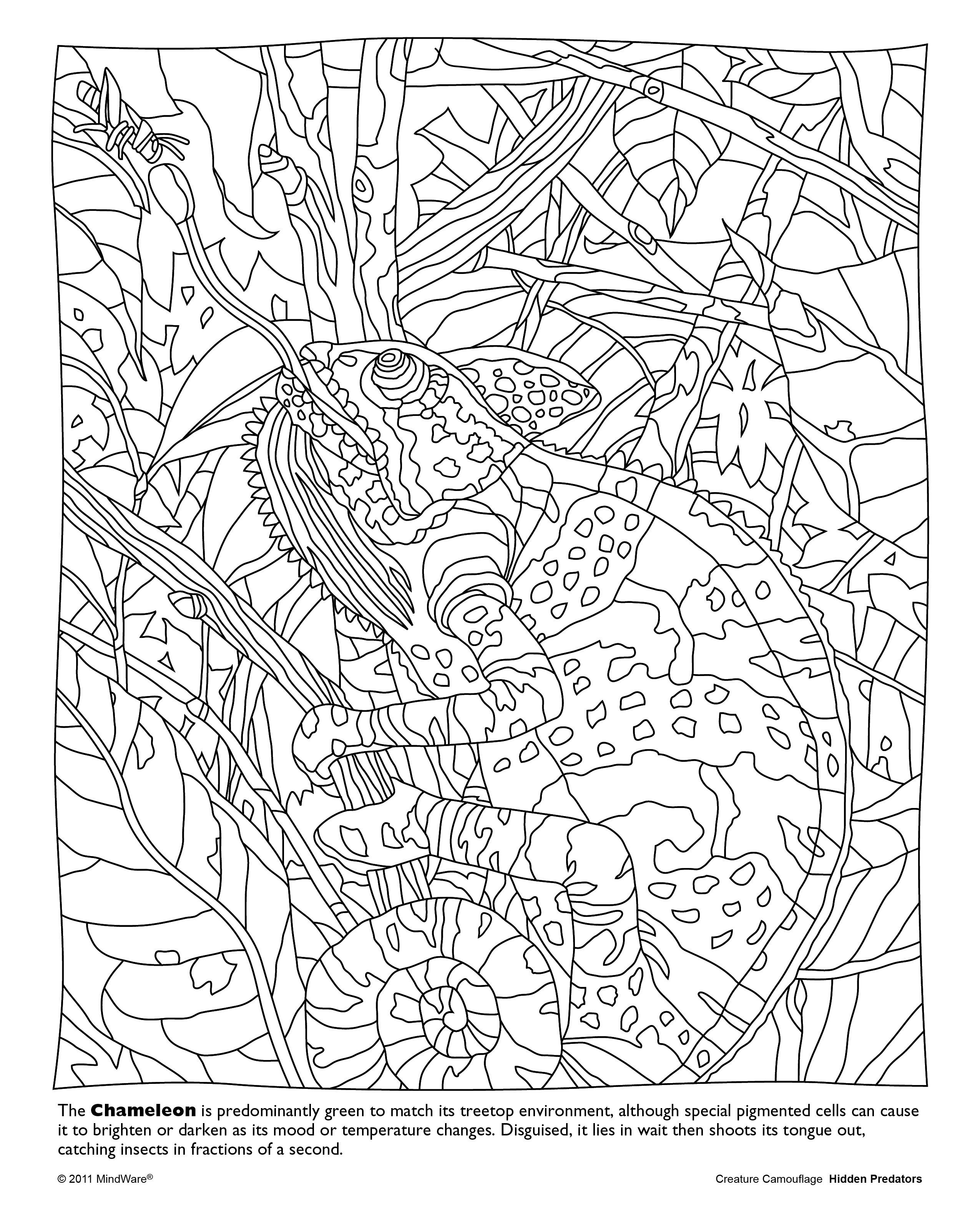 Hidden Predators Coloring Book | Coloring Animal | Coloring Pages To - Free Printable Fall Hidden Pictures