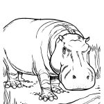 Printable Hippo Coloring Pages | Coloringme   Free Printable Hippo Coloring Pages