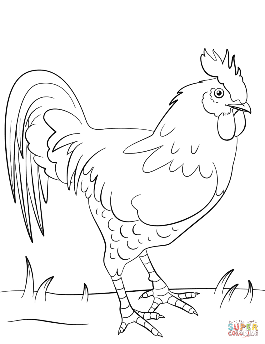 Rooster Coloring Page | Free Printable Coloring Pages - Free Printable Pictures Of Roosters