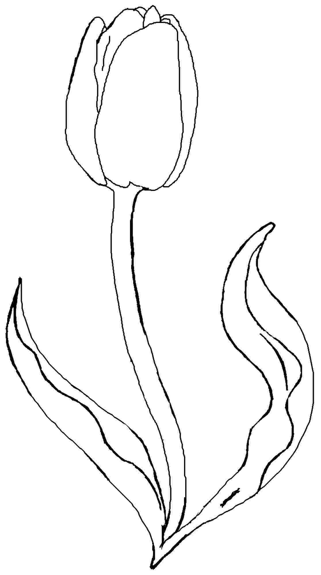Tulips Coloring Pages. Christmas Presents Christmas Presents For - Free Printable Tulip Coloring Pages