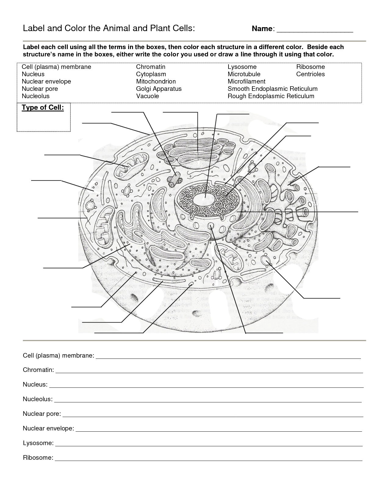 Worksheet : Animal Cell Coloring Worksheet Answers Animal Cell - Free Printable Cell Worksheets
