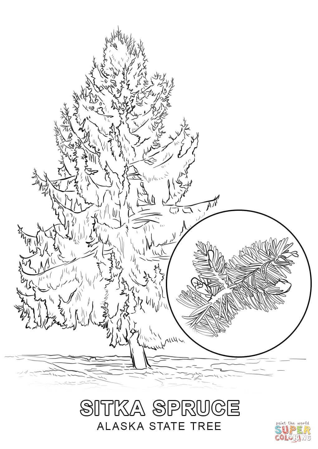 Alaska State Tree Coloring Page | Free Printable Coloring Pages - Free Printable Pictures Of Alaska