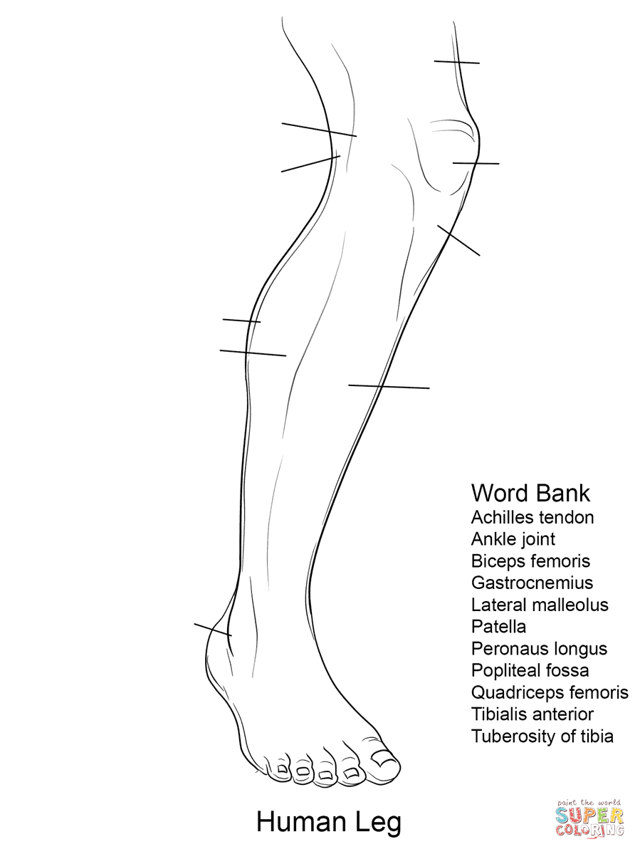 Anatomy Coloring Pages | Free Coloring Pages - Free Anatomy Coloring Pages Printable