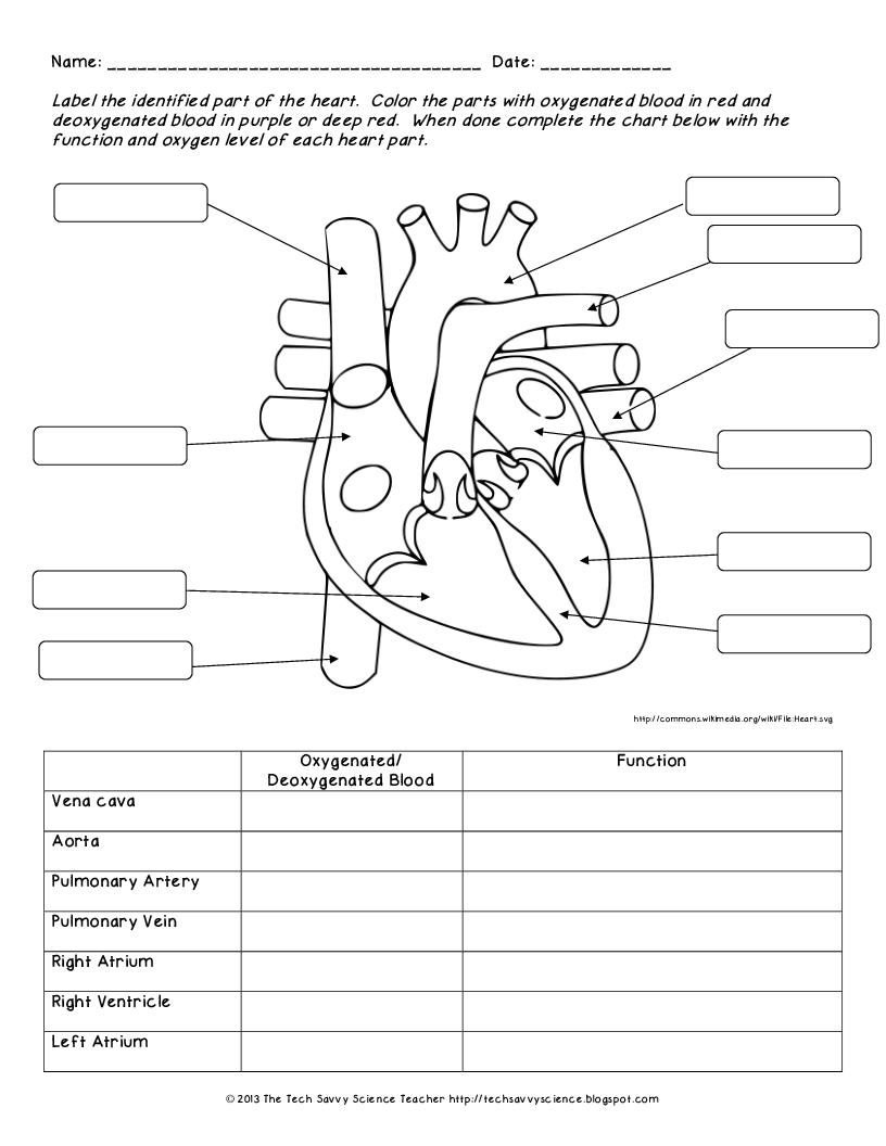 Anatomy Labeling Worksheets - Bing Images | Esthetics | Human Body - Free Printable Human Anatomy Worksheets