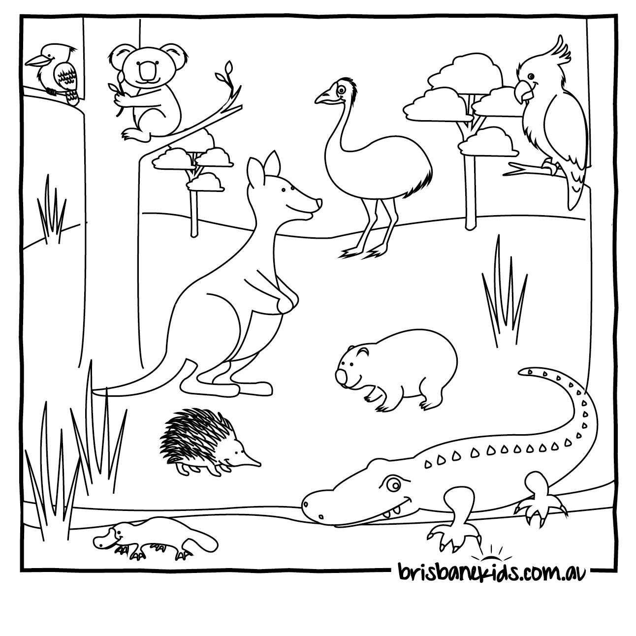 Australian Animals Colouring Pages   Brisbane Kids - Free Printable Australian Animals