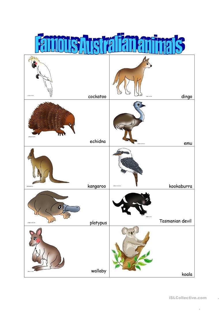 Australian Animals Worksheet - Free Esl Printable Worksheets Made - Free Printable Australian Animals
