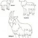 Billy Goats Gruff Coloring Page Lovely Free Printable Colour In Role   Three Billy Goats Gruff Masks Printable Free