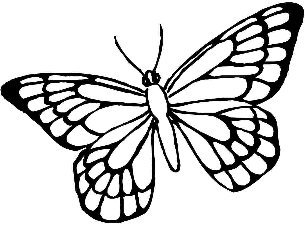 Butterfly Coloring Pages   Free Download Best Butterfly Coloring - Free Printable Butterfly Coloring Pages