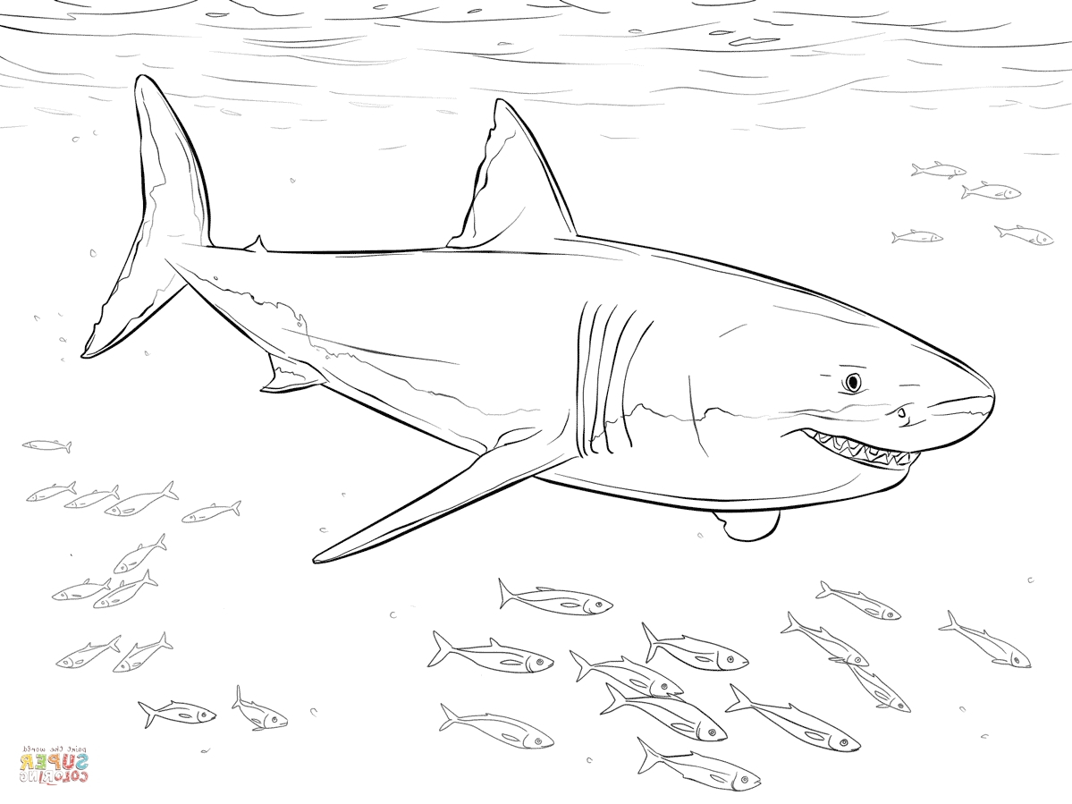 Coloring Ideas : Free Shark Coloring Pages Amazing Great White Dwcp - Free Printable Great White Shark Coloring Pages