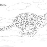 Coloring Ideas : Wild Animal Coloring Sheets Image Inspirations   Free Printable Wild Animal Coloring Pages
