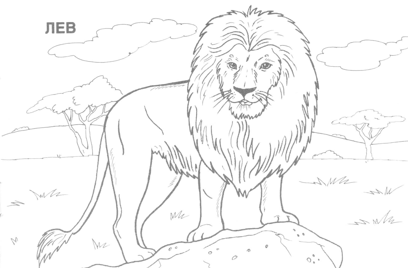 Coloring:coloring Pages Hard Animals Printable Adult Coloring Pages - Free Printable Wild Animal Coloring Pages