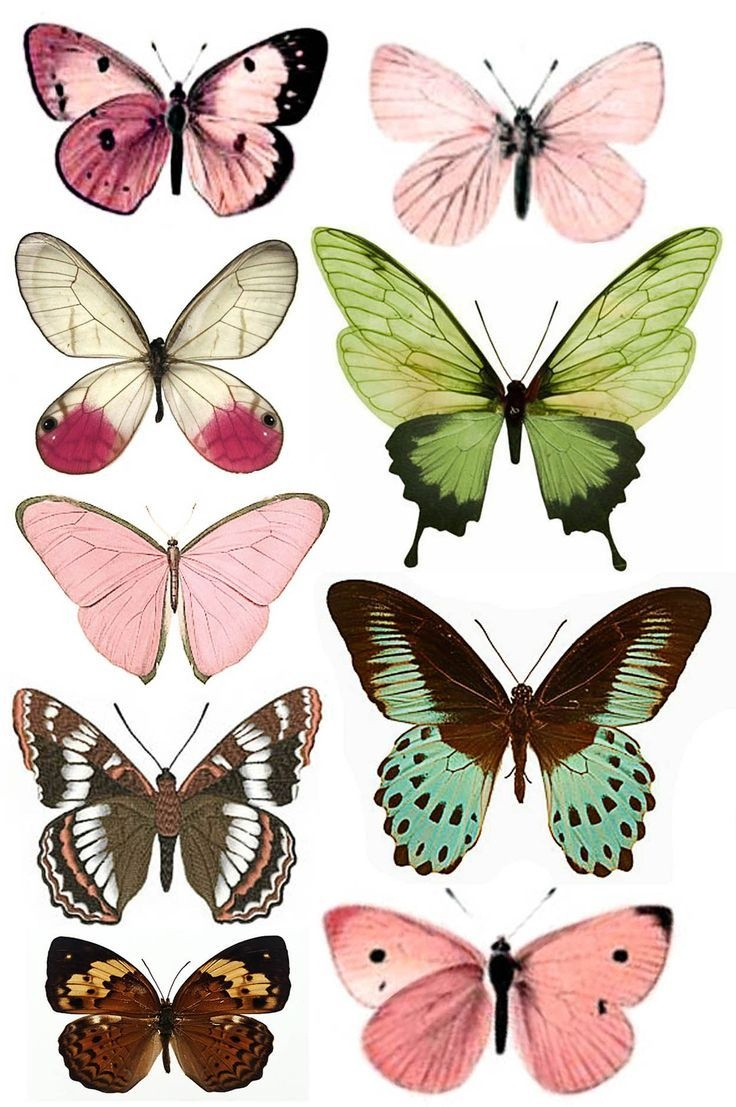 Штампомания: Free Printables. Бабочки. | Vintage Adicted | Butterfly - Free Printable Butterfly Pictures