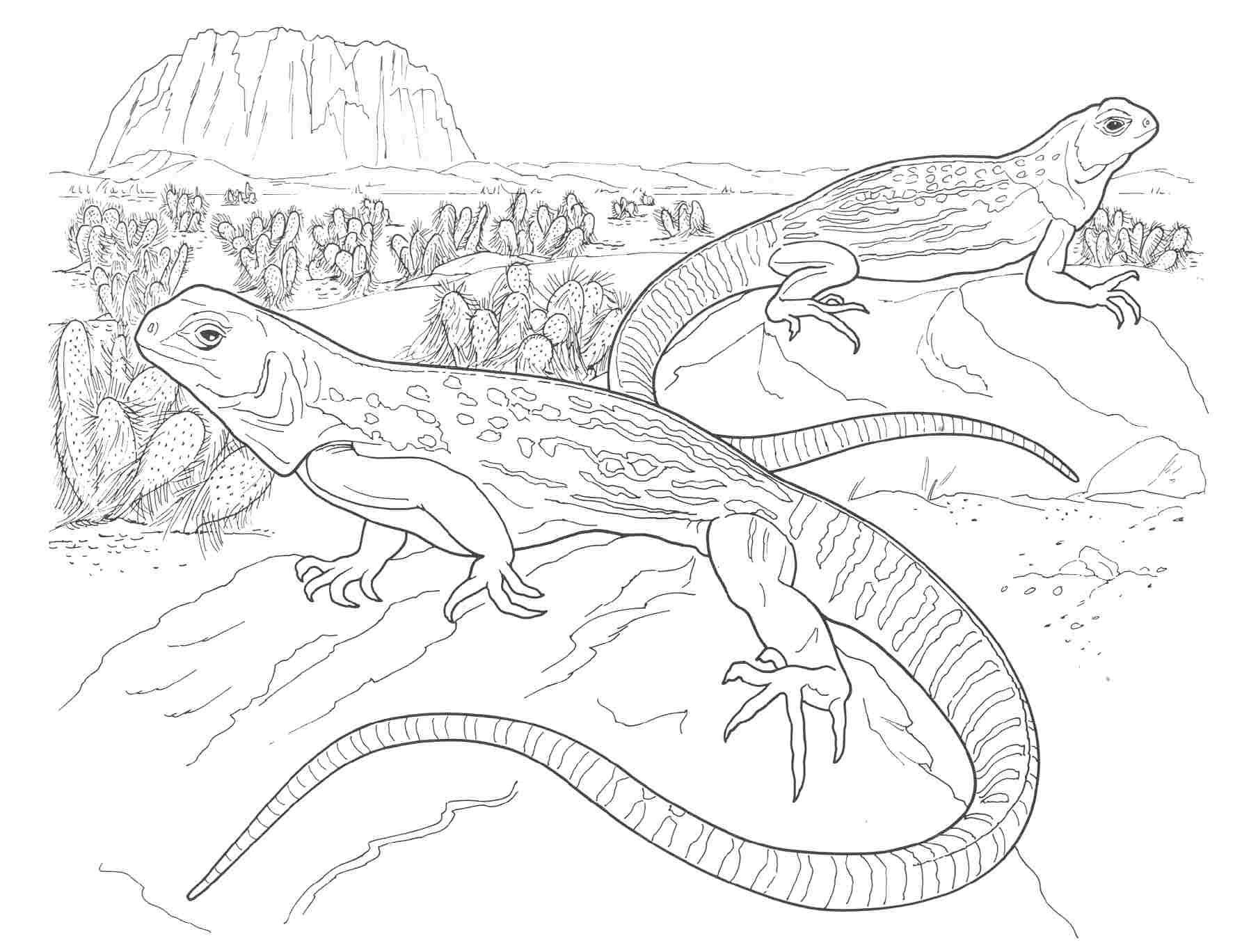 Desert Animals Coloring Pages North American | Coloring Pages - Free Printable Desert Animals