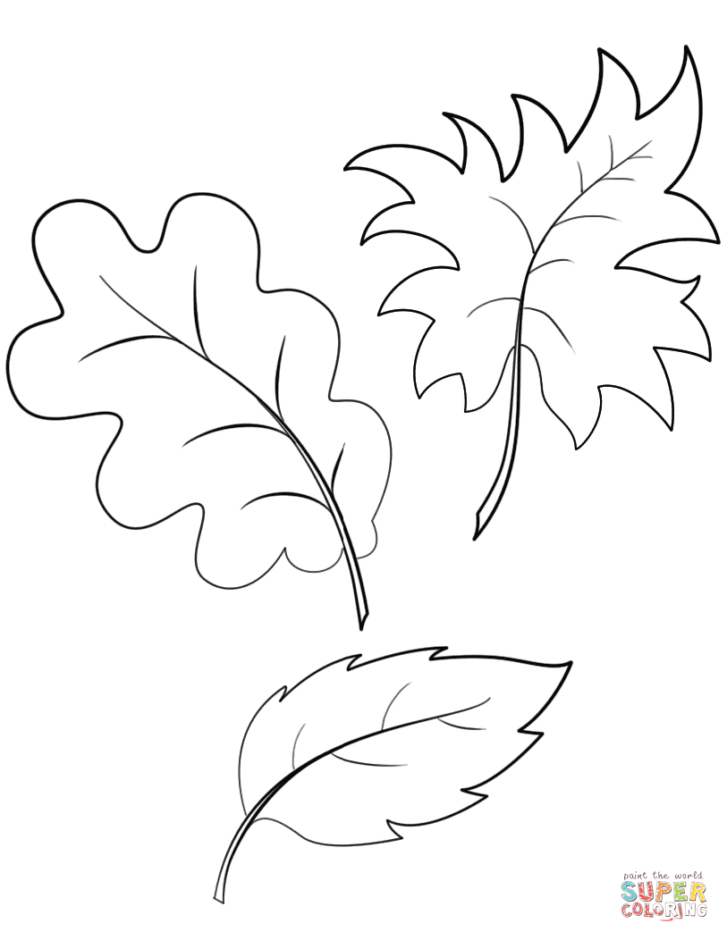 Fall Autumn Leaves Coloring Page   Free Printable Coloring Pages - Free Printable Leaf Coloring Pages