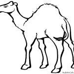 Free Cartoon Desert Animals, Download Free Clip Art, Free Clip Art   Free Printable Desert Animals