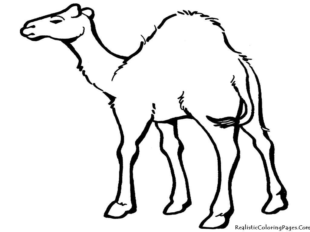Free Cartoon Desert Animals, Download Free Clip Art, Free Clip Art - Free Printable Desert Animals