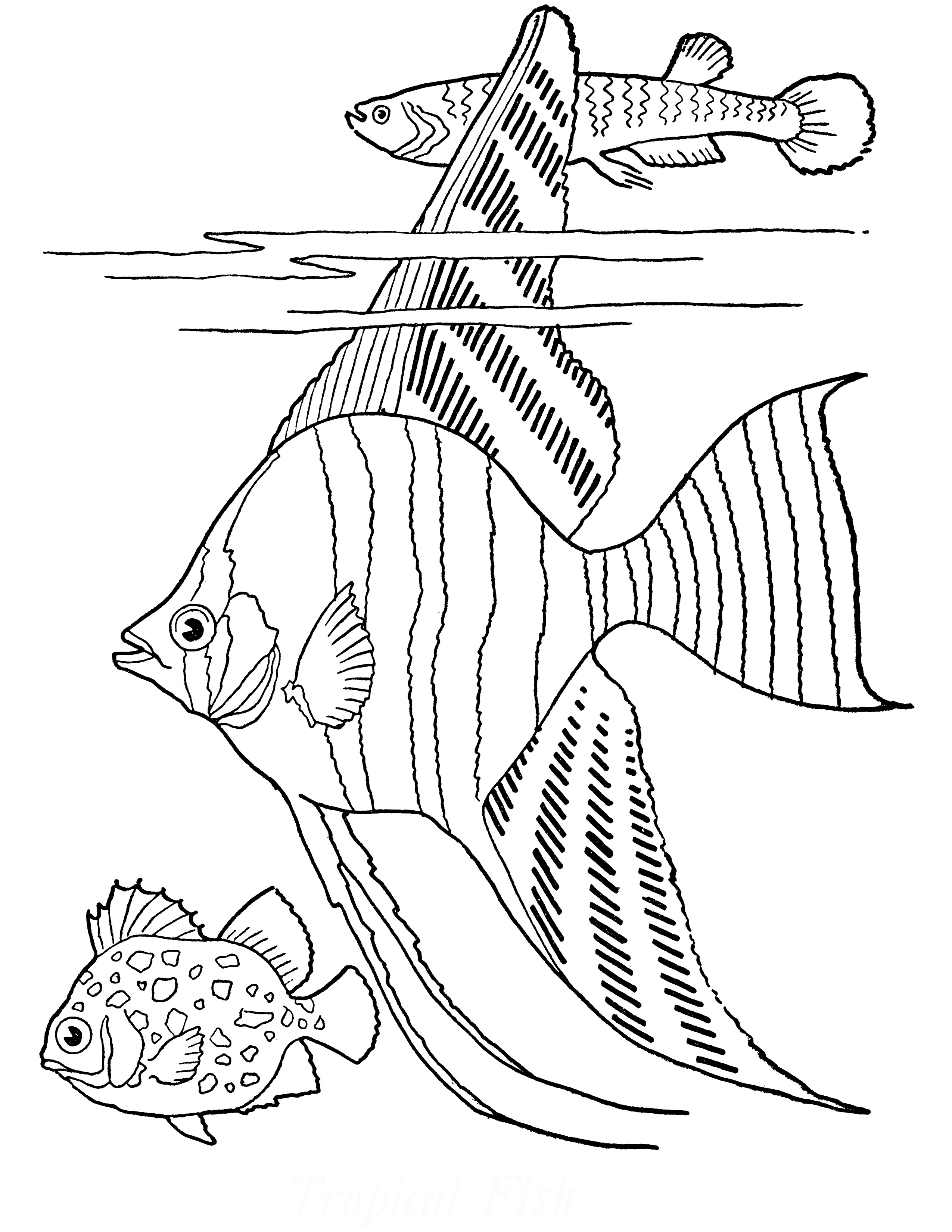 Free Printable Adult Coloring Page - Tropical Fish! - The Graphics Fairy - Free Printable Fish Coloring Pages