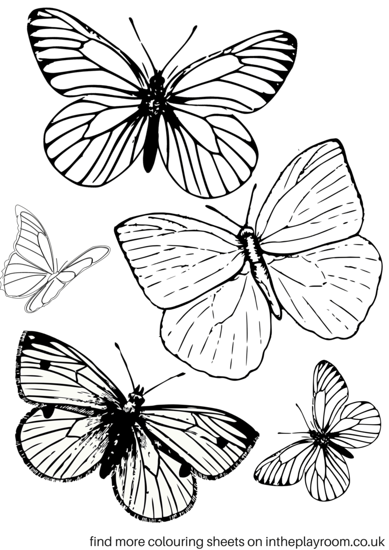 Free Printable Butterfly Colouring Pages | Bible Class | Butterfly - Free Printable Butterfly Pictures