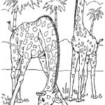 Free Printable Giraffe Coloring Pages For Kids | Coloring | Giraffe   Free Printable Wild Animal Coloring Pages