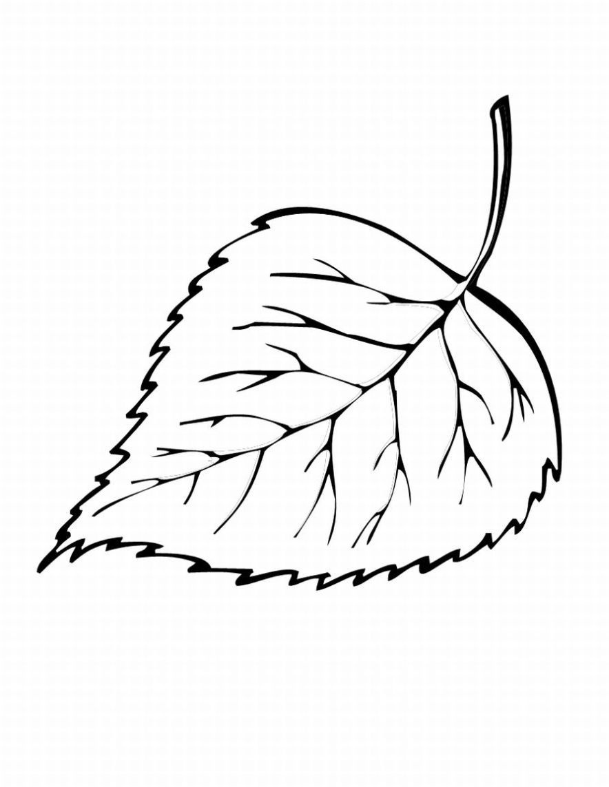 Free Printable Leaf Coloring Pages For Kids   ~*~ Coloring Pages - Free Printable Leaf Coloring Pages