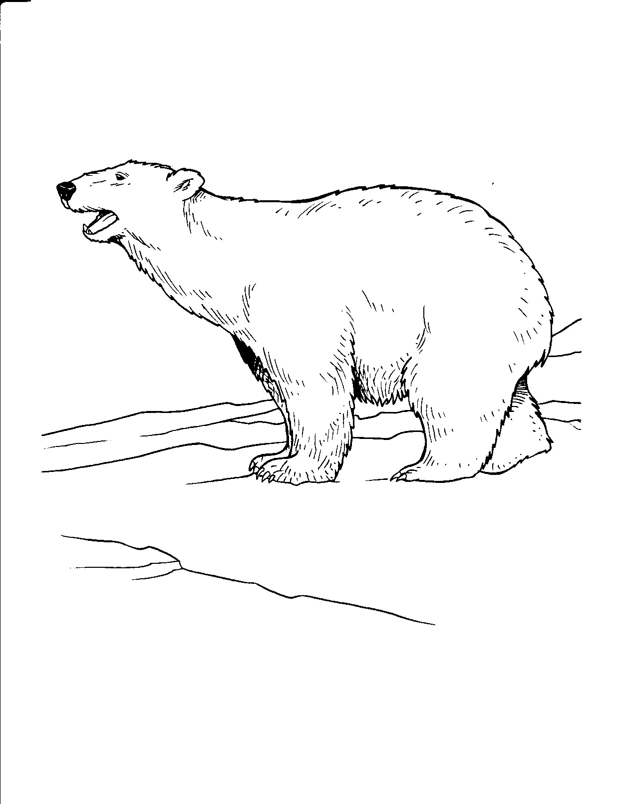 Free Printable Polar Bear Coloring Pages For Kids - Polar Bear Printable Pictures Free