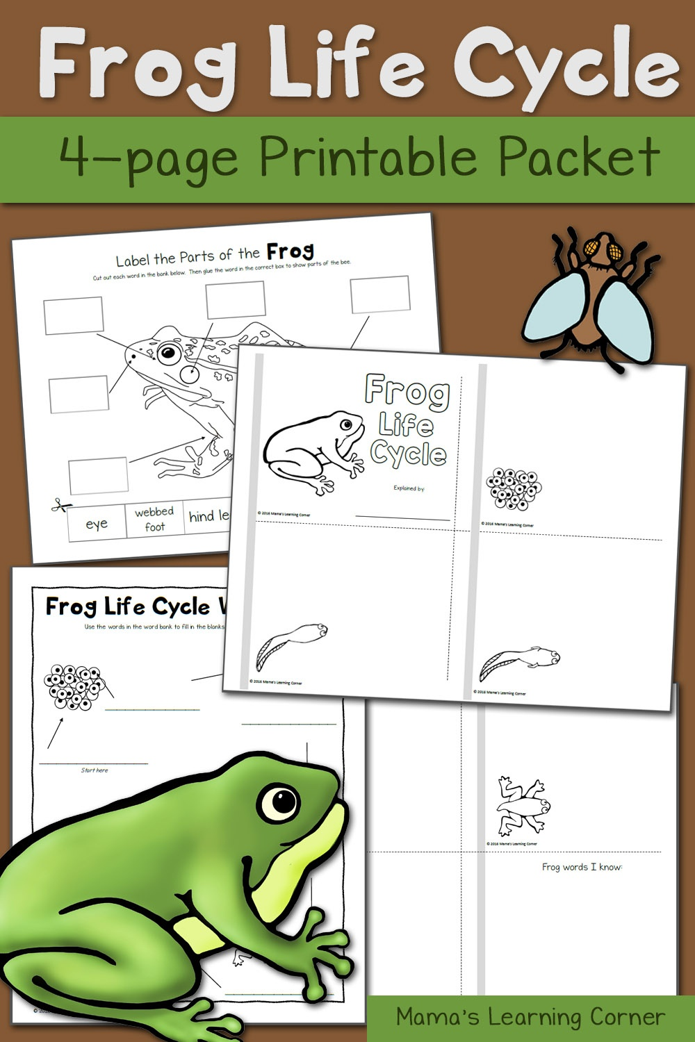 Frog Life Cycle Worksheets - Mamas Learning Corner - Life Cycle Of A Frog Free Printable Book