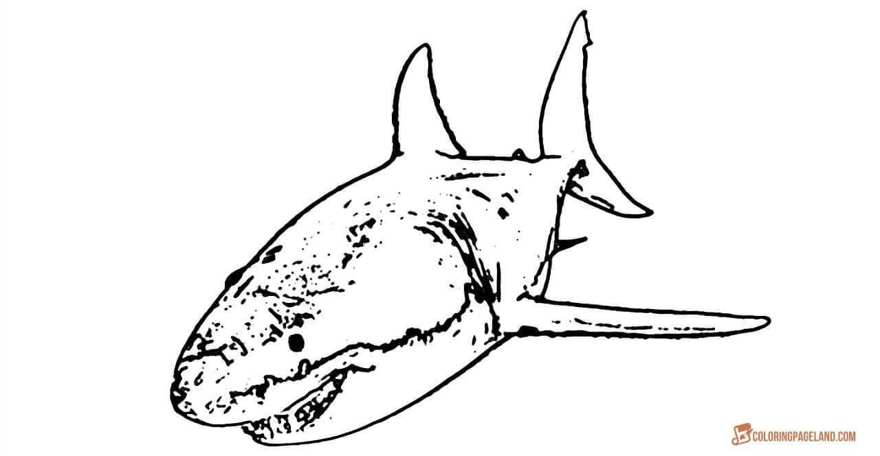 Great White Shark Coloring Pages - Downloadable And Printable Sheets - Free Printable Great White Shark Coloring Pages