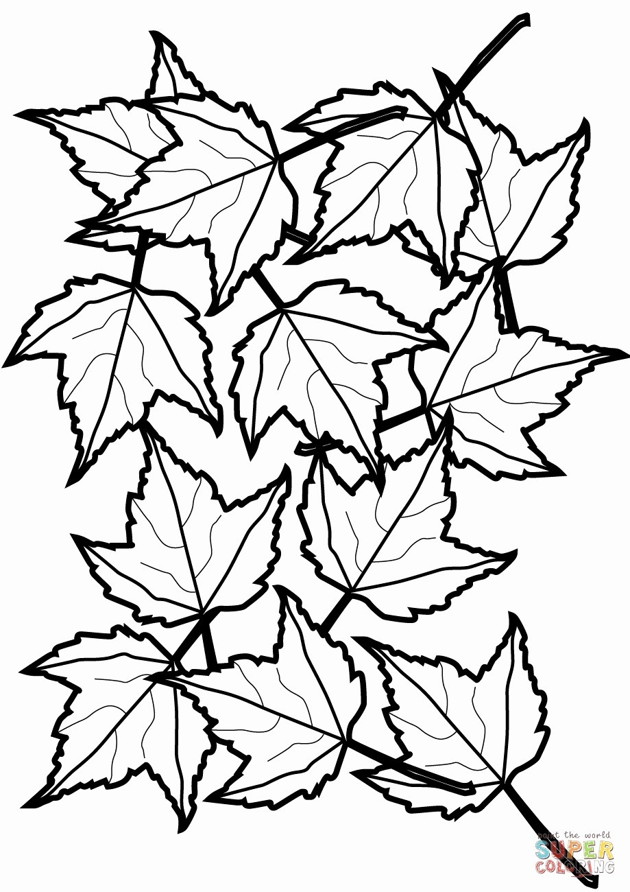 Leaf Coloring Page Cooloring Book Fall Leaves Coloring Sheet Free - Free Printable Leaf Coloring Pages