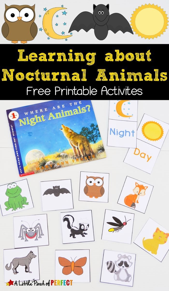 Learning About Nocturnal Animals Free Printable Activities | Animals - Free Printable Animal Classification Cards