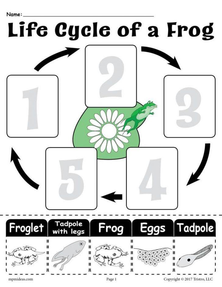 Life Cycle Of A Frog Free Printable Book