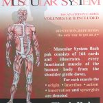 Muscle Anatomy Flash Cards And The Muscles Of The Human Body Muscles   Free Printable Muscle Flashcards