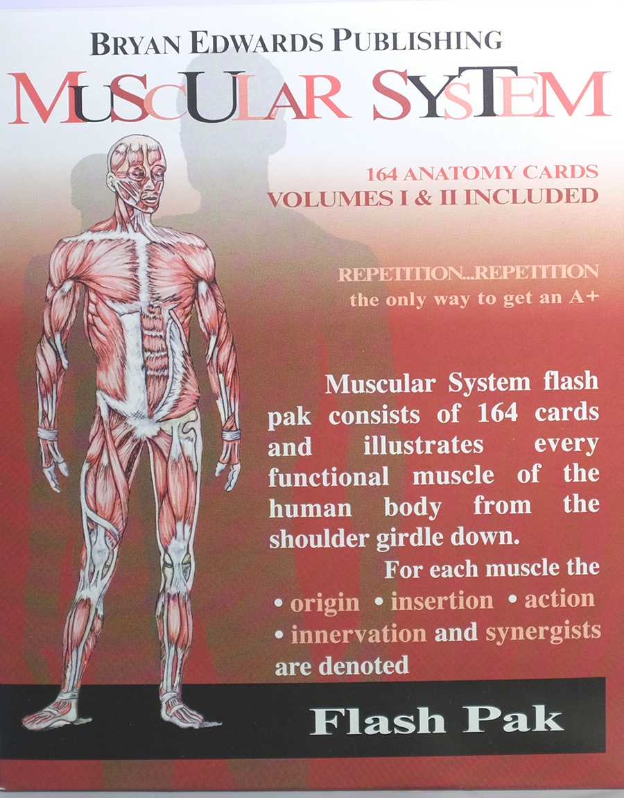 Muscle Anatomy Flash Cards And The Muscles Of The Human Body Muscles - Free Printable Muscle Flashcards