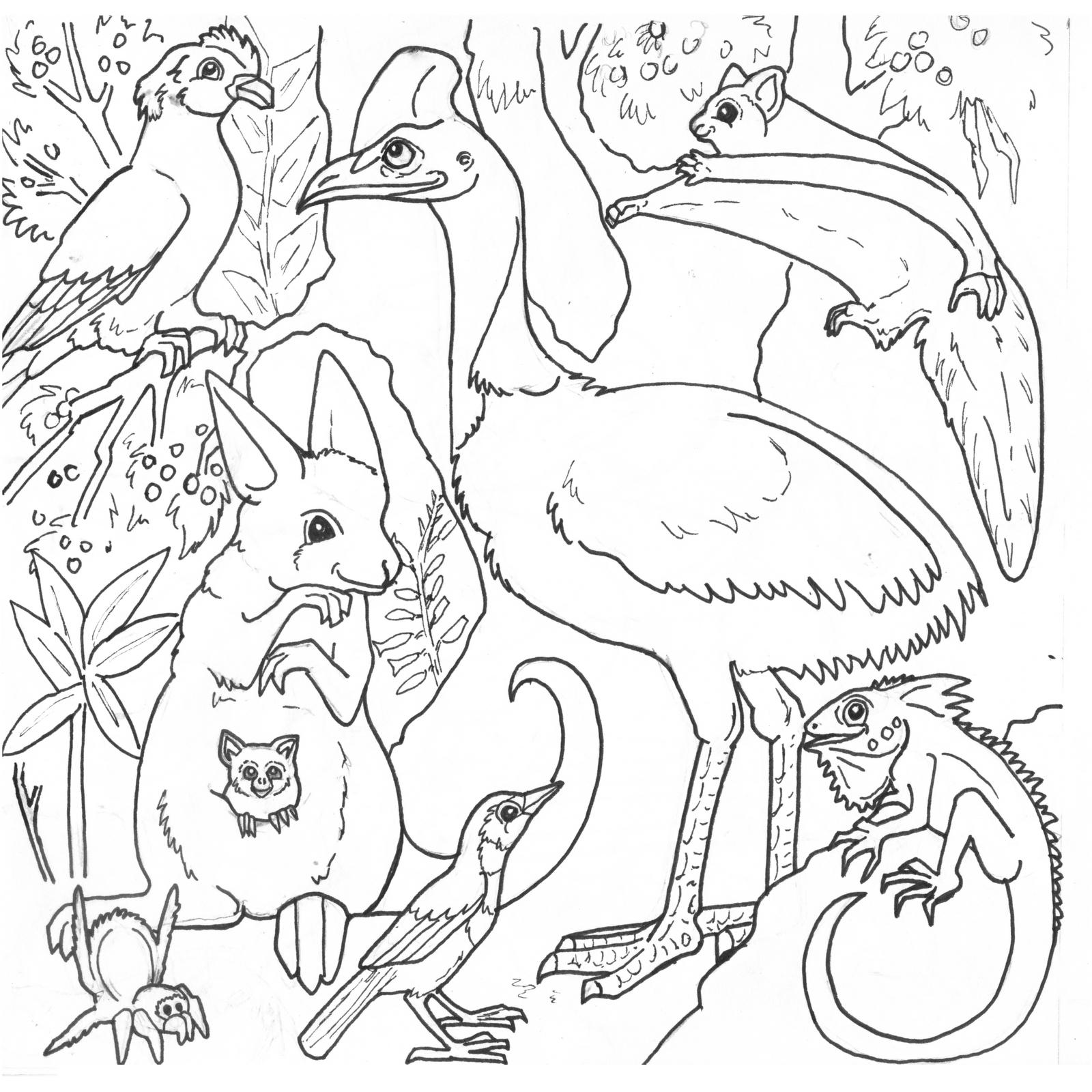 Pinbirgit Keys On Clip Art Birds   Coloring Pages For Kids - Free Printable Australian Animals